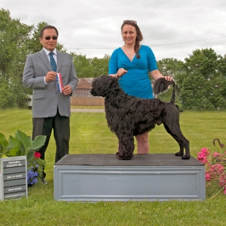 Nash's first BOB win at Ontario County Kennel Club June 2016