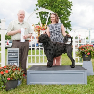 Nash takes BOB and a Group 4th win at Kawartha Kennel Club Show, July 2016 and finishes his Grand Championship the same weekend - just before 2 years of age