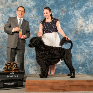 Nash goes Select Dog among steep competition at Guelph KC, April 2016