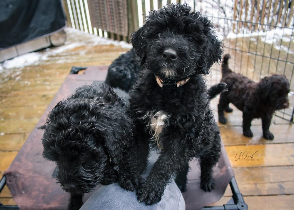 Pups--2