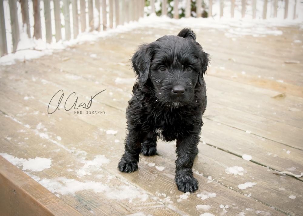 Pups--3