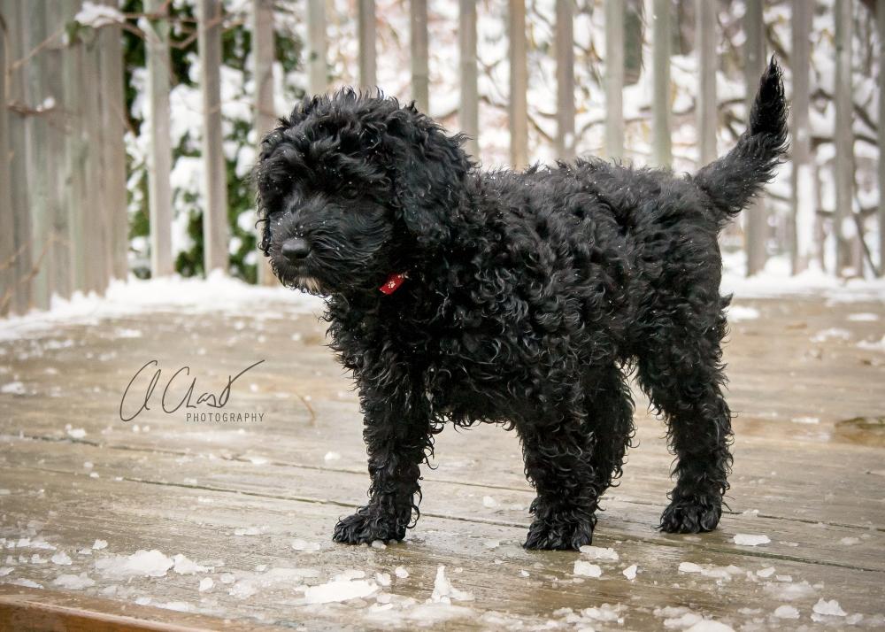 Pups--4