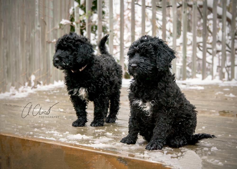 Pups--6