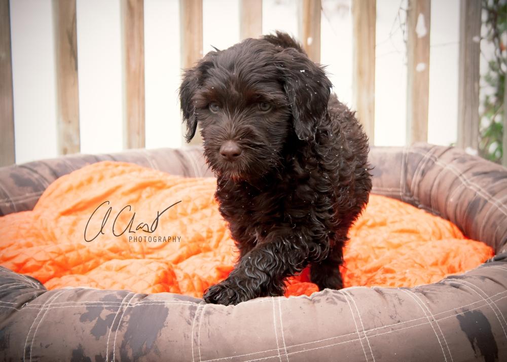 Pups--7