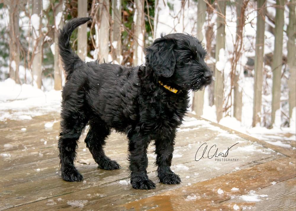 Pups--8