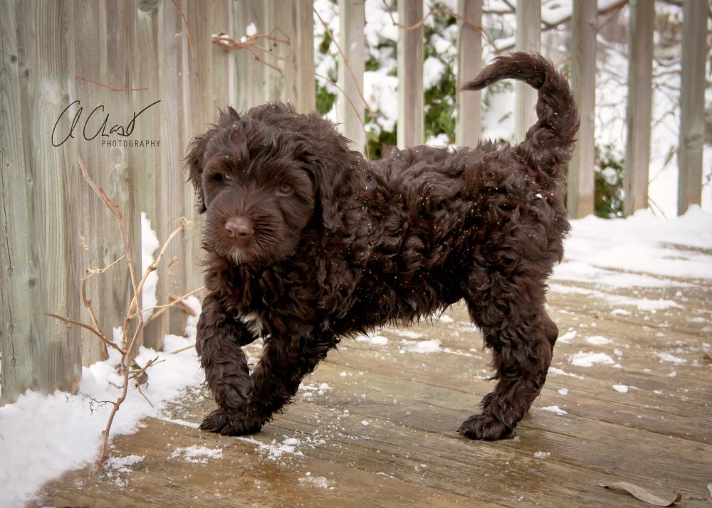 Pups--9