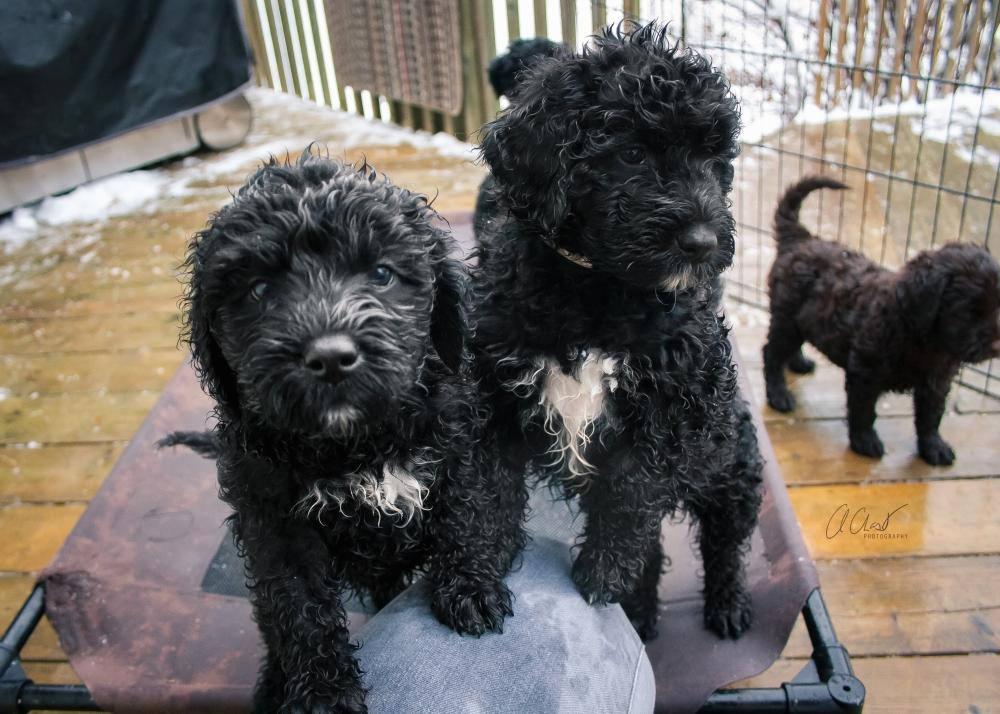 Pups-